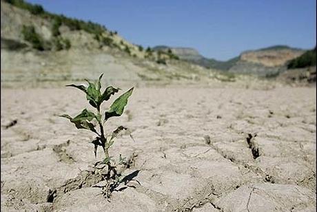 سایه سنگین خشکسالی بر تولید گندم گلستان