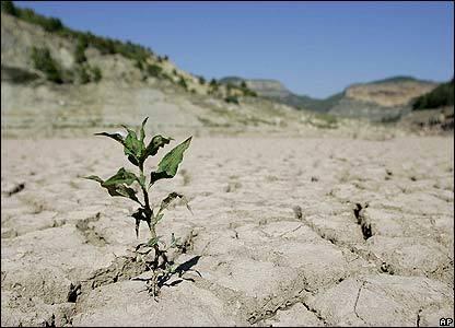 خسارت خشکسالی به کشاورزی و محیط زیست گناباد