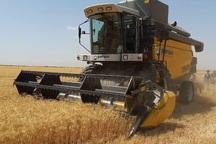 تولید گندم در اصفهان بیش از 2 برابر شد