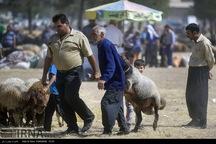11 جایگاه عرضه دام قربانی در کرمانشاه ایجاد شد