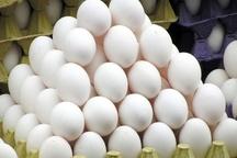 قیمت تخم مرغ به حالت عادی بر میگردد