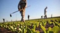 خسارت هزار و 680 میلیارد ریالی کرونا به واحدهای کشاورزی قزوین