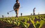 کشاورزان و دامداران چگونه از ابتلا به کرونا پیشگیری کنند؟