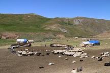 29 روستا در ارومیه ویژه عشایر است