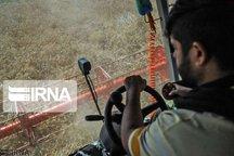 ۲۰۷ هزار تن محصول گندم در استان مرکزی خریداری شد