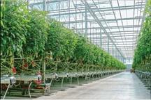 82 میلیارد ریال وام به گلخانه های کهگیلویه و بویراحمد پرداخت شد