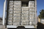 ۹۸۰ قطعه مرغ زنده قاچاق در آستارا توقیف شد