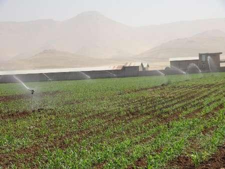 بیش از چهار هزار هکتار از زمین های کشاورزی روانسر به سیستم های آبیاری تحت فشار مجهز شده است