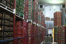 ذخیرهسازی 2 هزار تن میوه در سردخانههای قزوین