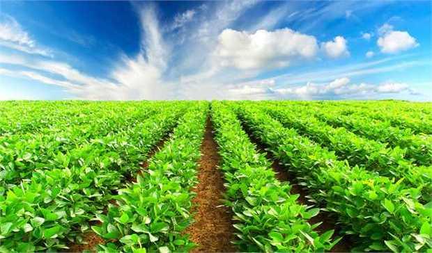 25 هزار میلیارد ریال گردش مالی کشاورزی آذربایجان شرقی