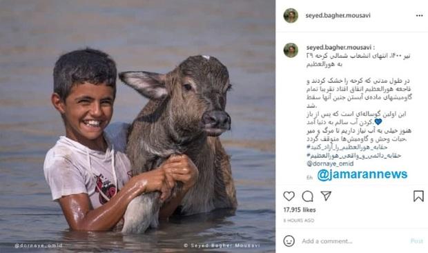 خشک کردن کرخه تمام جنین های گاومیش ها را کشت + عکس