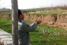نجات سه بال سهره در قزوین از چنگال شکارچیان
