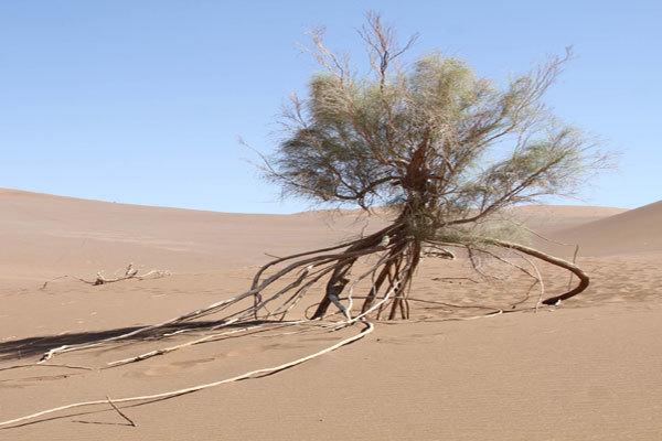 بیابان زدایی 500 هکتار از اراضی همدان