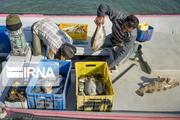 فصل صید از منابع آبی مهاباد آغاز شد