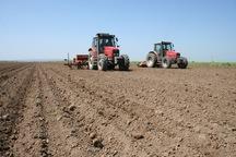 سطح زیر کشت گندم در فریدن کاهش یافت