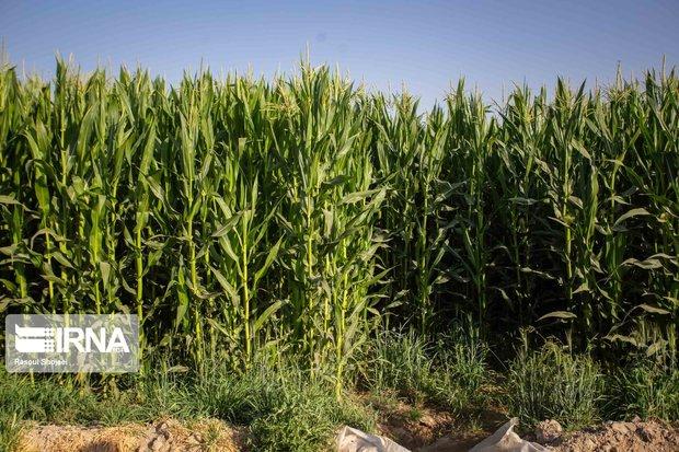 بیم و امیدهای کشاورزی کهگیلویه و بویراحمد پس از خشکسالی