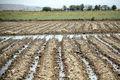 طرح های آبی گچساران زمینه اشتغال هفت هزار نفر را فراهم می کند