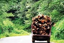 واقعیت فیلم قطع درختان جنگل های ارسباران چیست؟