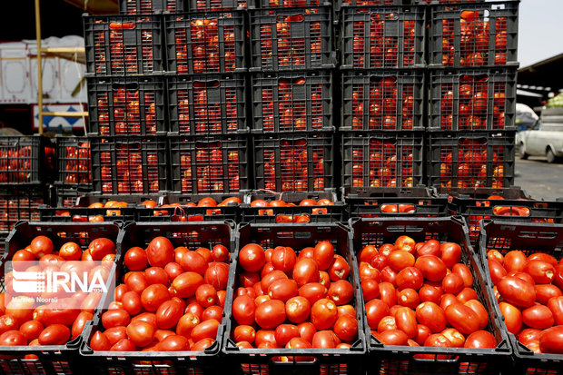 ۶۰۰ تن گوجه فرنگی از سبزوار صادر شد