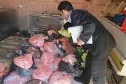 بیش از ٢ تن گوشت فاسد در شهرستان ری معدوم شد