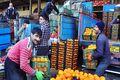 شایعهای دیگر پیرامون حضور تجار عراقی در بازار میوه شیراز