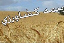 15 دی، آخرین مهلت بیمه کشت پاییزه گندم و جو استان ایلام