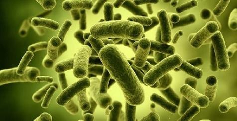 هشدار! ظهور باکتری های مقاوم در برابر الکل