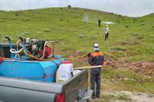 مبارزه با آفات در ۲۳۸هزار هکتار از اراضی کشاورزی کهگیلویه و بویراحمد انجام شد