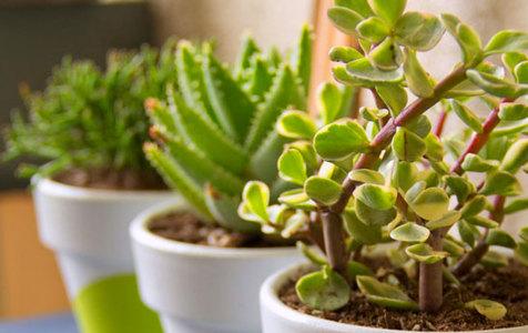 قدرت جادویی گل و گیاهان سبز