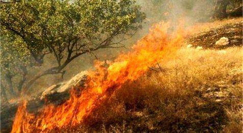 مهار آتش سوزی در جنگل های لویزان تهران