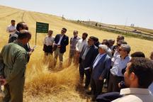 بازدید معاون وزیر جهاد کشاورزی از مزارع الگویی قزوین