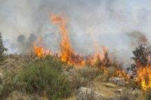 سهل انگاری و بی احتیاطی علت آتش سوزی مراتع و مزارع تاکستان اعلام شد