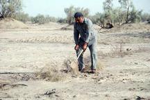 بیش از 2 هزار تله زنده گیری هوبره در ایرانشهر جمع آوری شد