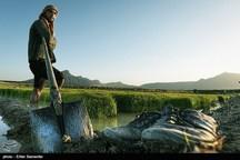 ۵۲۰ هکتار از اراضی کشاورزی بویراحمد آبرسانی میشود