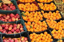 عرضه نوروزی سیب و پرتقال با نرخ دولتی در استان تهران آغاز شد