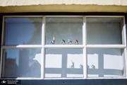 پنجرههای عجیب بلژیک