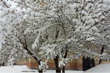 بارش امسال در آذربایجان غربی 105میلی متر بیشتر از پارسال است