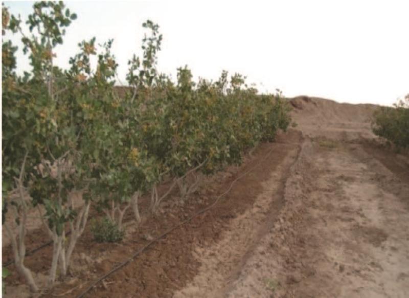 باغداران دامغانی 820 میلیون ریال یارانه نهال دریافت کردند