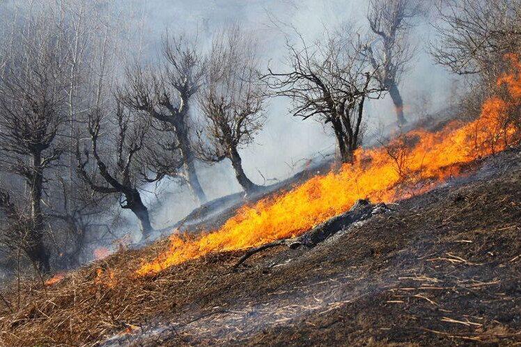 آتش سوزی در مراتع تنگستان