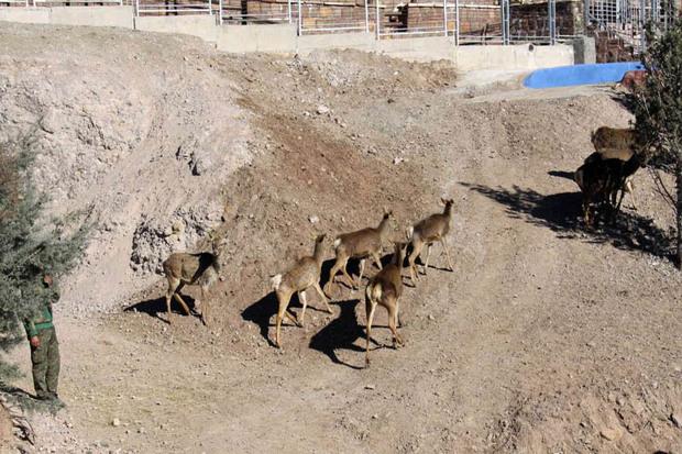 اولین سافاری پارک کشور و تجربه رویارویی انسان با حیات وحش