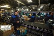 اشتغالزایی صنعتی در مازندران ۲۰ درصد افزایش یافت