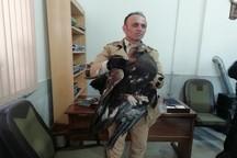 یک قطعه عقاب در فیروزکوه رها سازی شد