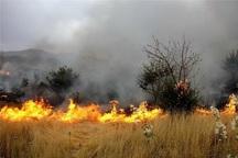 آتش سوزی پناهگاه حیات وحش آستارا مهار شد