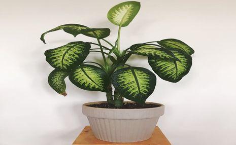 نکاتی برای خرید گل و گیاه آپارتمانی+ آموزش نگهداری چند نوع گیاه