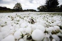تگرگ به 2 هزار هکتار از اراضی کشاورزی سلسله خسارت زد