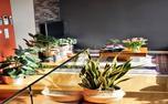 4 قانون ساده برای زنده نگه داشتن گیاهان در خانه