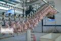 ذخیره روزانه ۵۰ تن مرغ مازاد تولید در گیلان
