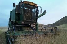 گندمزارها؛ نوید بخش سفره پربرکت کشاورزان