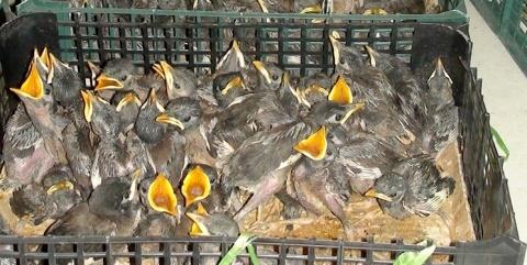 150 قطعه پرنده کمیاب در تربت حیدریه کشف شد
