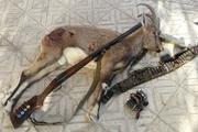 دستگیری شکارچی غیر مجاز یک رأس قوچ وحشی در ازنا